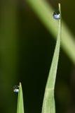Dauwdalingen in gras Stock Afbeeldingen