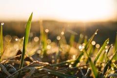 Dauwdalingen op bladen van vers gras, ochtendstralen van zon Exemplaarruimte voor tekst stock afbeeldingen
