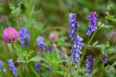 Dauwdalingen op bloemengebied Stock Foto