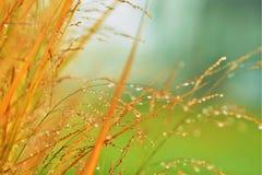 Dauwdalingen op de dalingsgebladerte van de gras vroeg ochtend stock foto