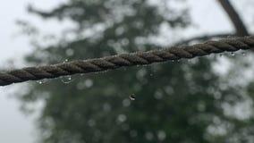 Dauwdalingen op een kabel stock video