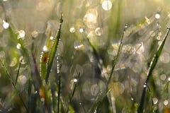 Dauwdalingen op gras royalty-vrije stock afbeelding