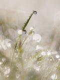 Dauwdalingen op Grasblad in de Vroege Ochtend met Mooie Len Royalty-vrije Stock Afbeelding