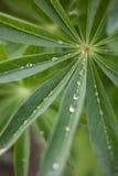 Dauwdalingen op groene bladeren Stock Foto