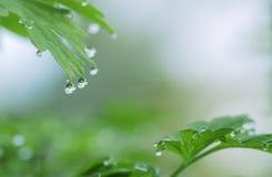 Dauwdalingen op groene bladerenachtergrond Royalty-vrije Stock Afbeelding