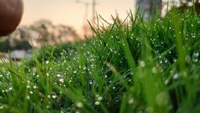 Dauwdalingen op het bladgrassprietje stock foto's