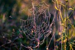 Dauwdalingen op het spinneweb Royalty-vrije Stock Foto's