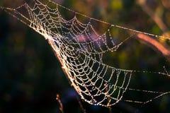 Dauwdalingen op het spinneweb Stock Fotografie