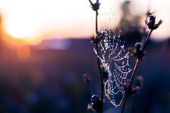 Dauwdalingen op het spinneweb Stock Afbeelding