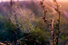 Dauwdalingen op het spinneweb Royalty-vrije Stock Afbeeldingen
