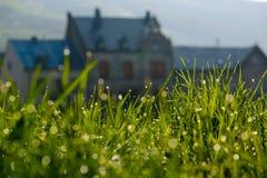 Dauwdruppels op gras Royalty-vrije Stock Foto's