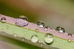 Dauwdruppeltjes op een grassprietje Stock Fotografie