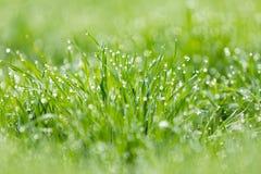 Dauwdruppeltjes op gras stock afbeelding