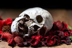 Davanti al cranio umano disposto su rosso ha asciugato i fiori sui precedenti di legno concetto della morte e di Halloween fotografie stock libere da diritti