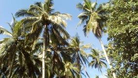 Davao Filippinerna Arkivfoton