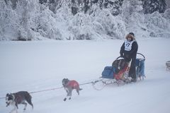 Dave Dalton in der Yukon-Suche Stockfotografie