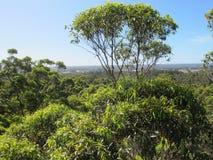 Dave Evans Bicentennial Tree, in Warren National Park, Western  Australia Royalty Free Stock Photography