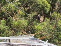 Dave Evans Bicentennial Tree, in Warren National Park, Western  Australia Stock Images