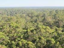 Dave Evans Bicentennial Tree, in Warren National Park, Western  Australia Stock Photography