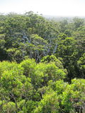 Dave Evans Bicentennial Tree, in Warren National Park, Western  Australia Stock Image