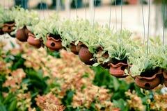 Dave pflanzte in den Tongefäßen, die Weinlesefarbe hergestellt wurden Stockbilder