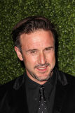 David Arquette Royalty Free Stock Photos