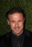 David Arquette Stock Photography
