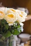 David austin rose. Nice david austin roses peach colour Royalty Free Stock Image