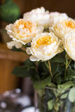David austin rose. Nice david austin roses peach colour Stock Photo