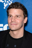 David Boreanaz Stock Images