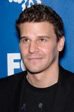 David Boreanaz Stock Photo