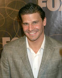David Boreanaz Royalty Free Stock Image