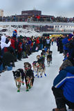 David Dalton begins the Yukon Quest Sled Dog Race Stock Photography
