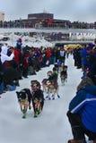 David Dalton begint met de Race van de Hond van de Slee van de Zoektocht Yukon Stock Fotografie