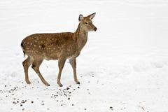 david hjortar s Arkivbild