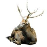 david hjortpere s Arkivfoton
