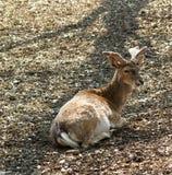 david hjortpere s Arkivfoto