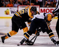David Krejci, Boston Bruins Stock Photo