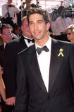 David Schwimmer Royalty Free Stock Image