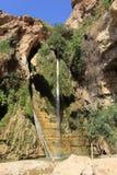 David Waterfall in het Natuurreservaat van Ein Gedi Stock Afbeeldingen