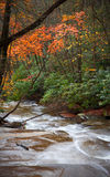 Davidson River flows through Pisgah Forest, NC. Royalty Free Stock Photography