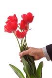 dawać tulipany zdjęcie stock