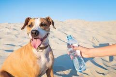 Dawać wodzie pies Żeńska ręka chwytów butelka woda dla t zdjęcie stock