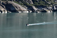 Dawes Glacier. Cruising through Endicott Arm to the Dawes Glacier in Alaska, USA Royalty Free Stock Photo