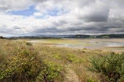 Dawlishkonijnenveld, Engeland royalty-vrije stock fotografie