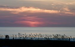 Dawn's Early Light Over Sea Oats Royalty Free Stock Image