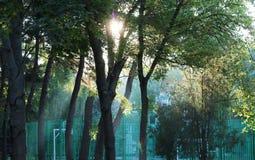 Dawn μεταξύ των δέντρων Στοκ Φωτογραφίες