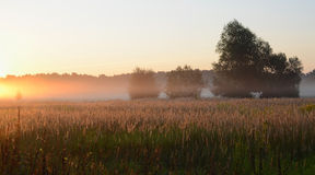 Dawn. Ομιχλώδες πρωί τον Αύγουστο Στοκ εικόνα με δικαίωμα ελεύθερης χρήσης