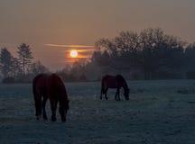Dawn πέρα από τα νέα δασικά πόνι στοκ εικόνες