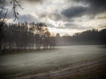 Dawn στα δάση στοκ εικόνες